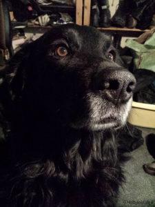 Murphy mit Bitte-Blick